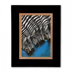 """Zebras At The Watering Hole"" Matted Print, art by Dexter Griffin"